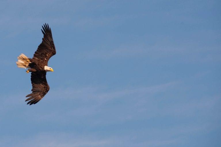 eagles20